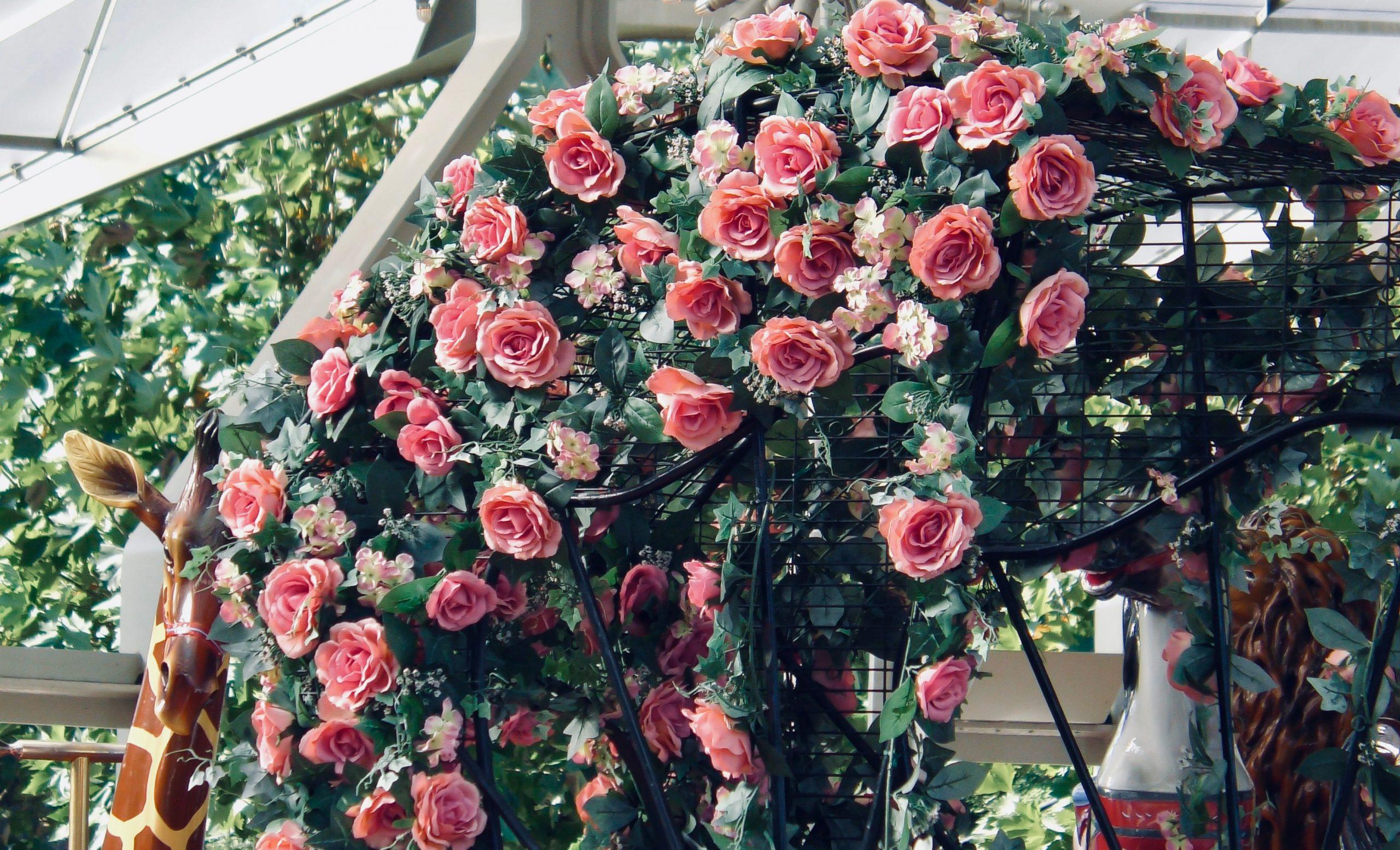 花嫁の花、野原に咲く6月の花。吉田拓郎